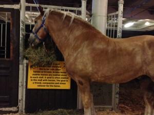 horse-horsecapades-chirp