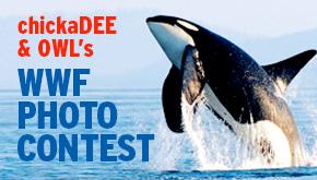 WWF Photo Contest button