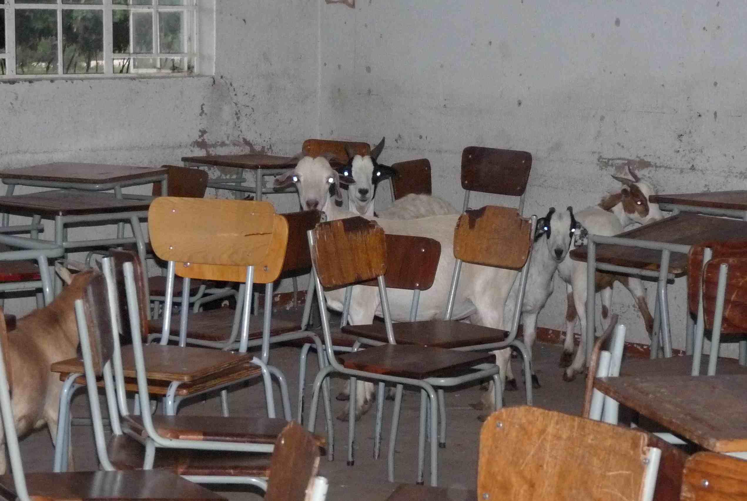 OWL Magazine: goats in school in Namibia