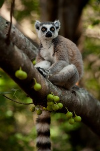 Island of Lemurs: Madagascar movie still