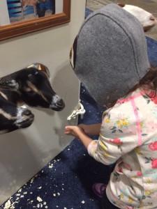 feeding goats at Royal Winter Fair