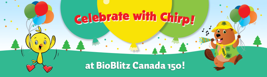 Chirp Magazine: Celebrate with Chirp!