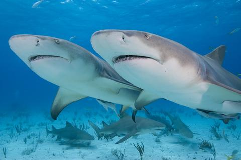 chirp magazine: shark awareness